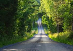IMGP1908skogsvägen