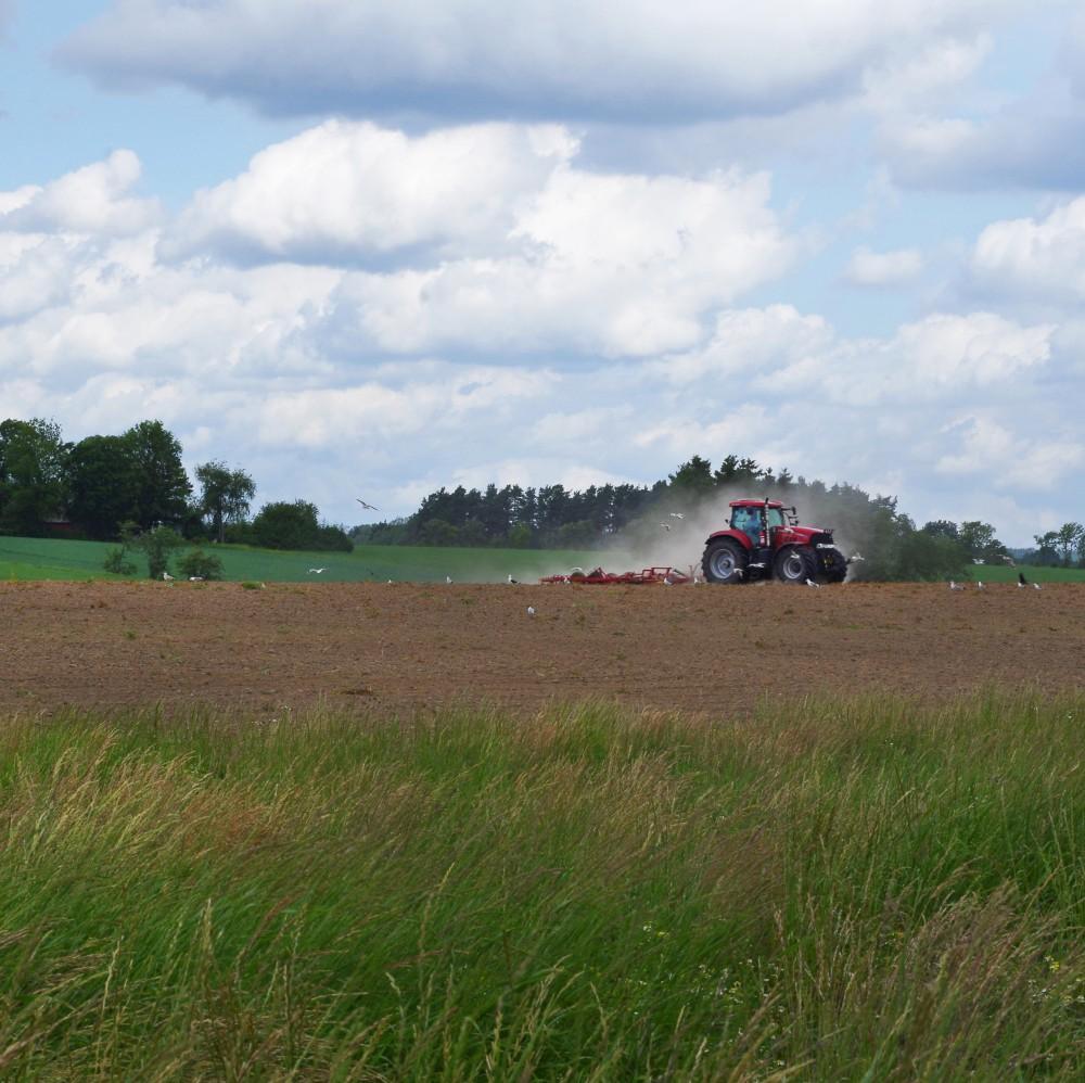 IMGP1525jordbruket