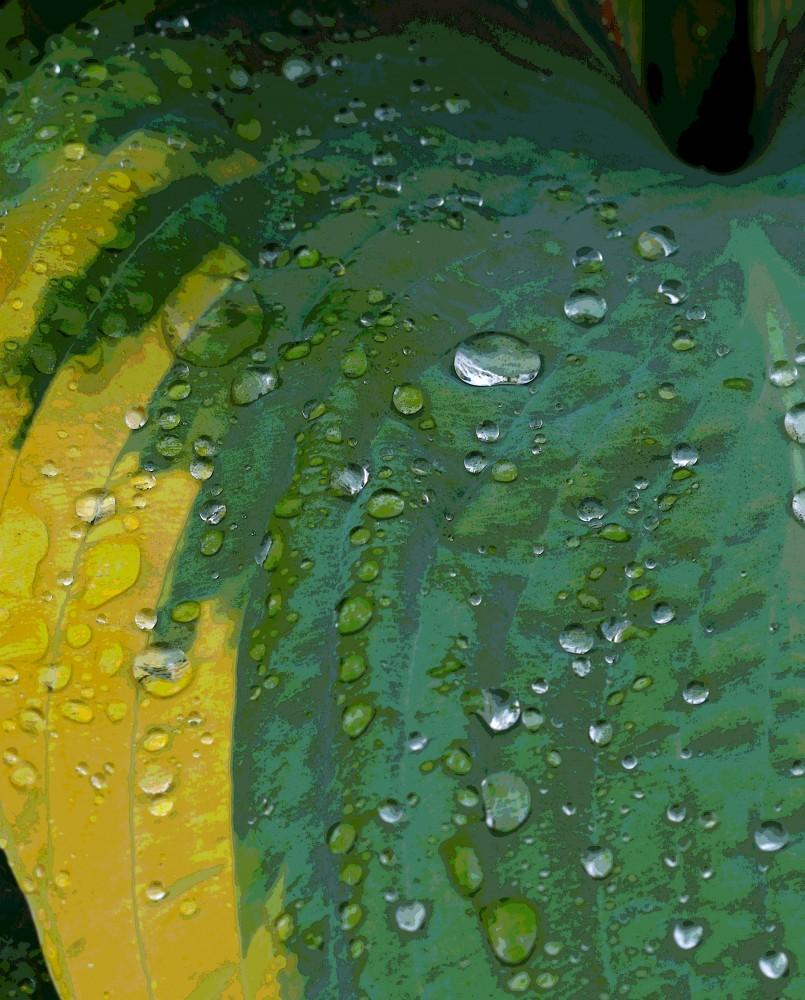 IMGP1654regnpåblad