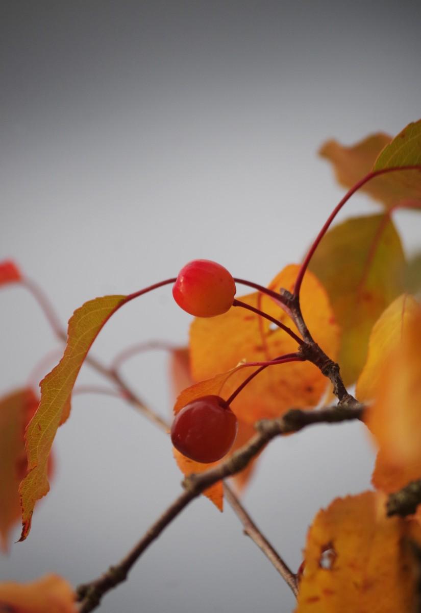 IMGP4127berries