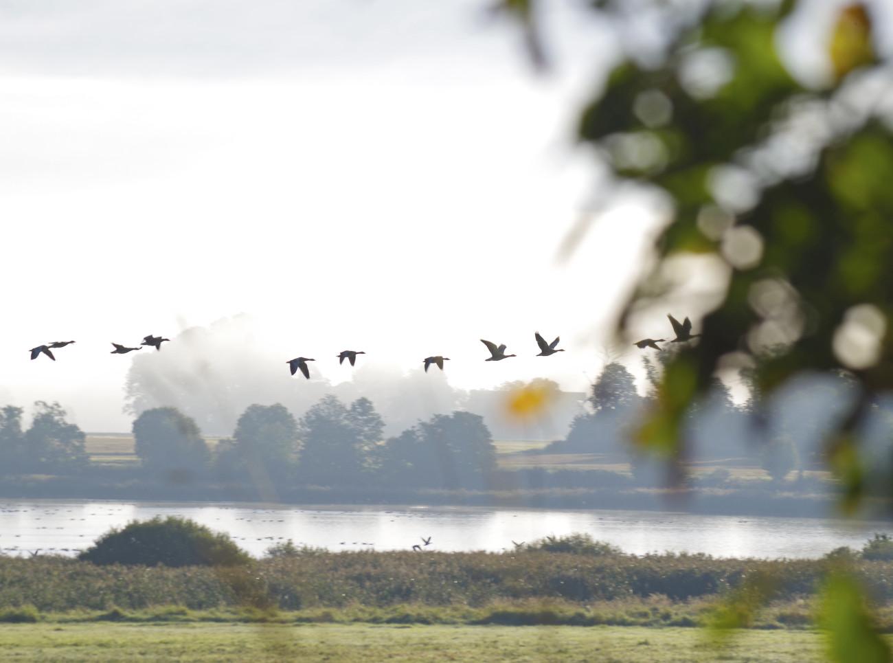 _IMG9933Höstflykt vid Hullsjön
